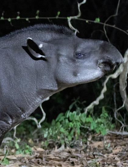 capa observação de mamíferos - wildlife tour _mammal watching