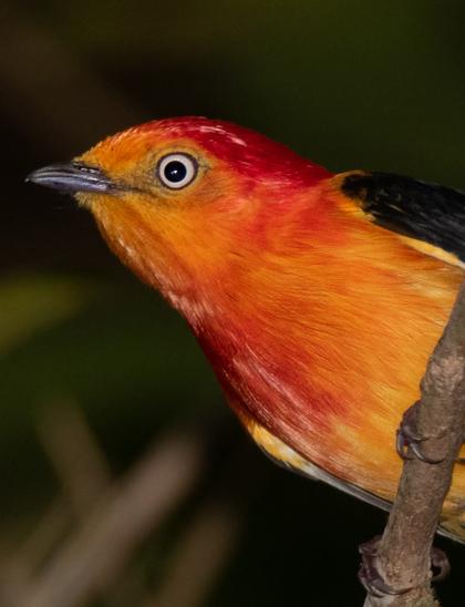 capa observação e fotografia de aves - Birdwatching (2)